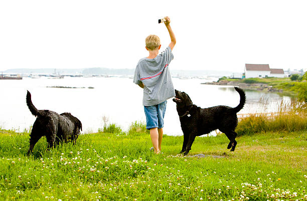 Boy playing fetch with two dogs stock photo