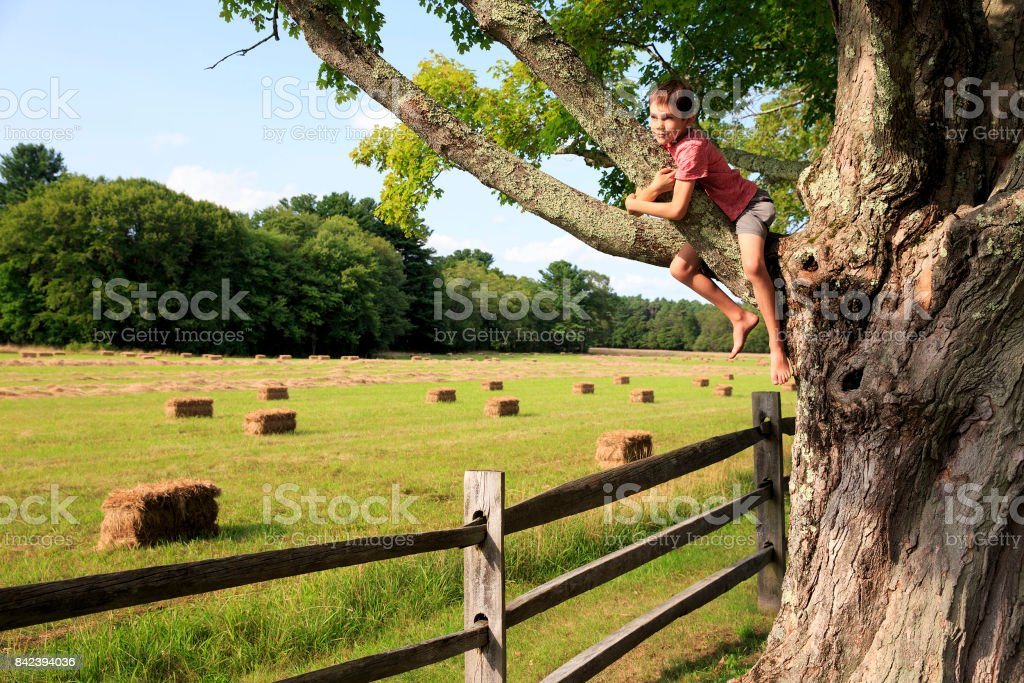 boy playing on a high tree stock photo