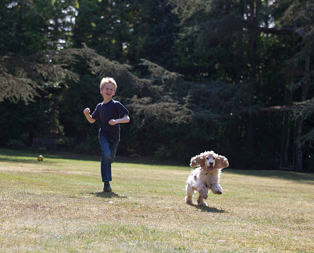 Boy playing with dog in backyard stock photo