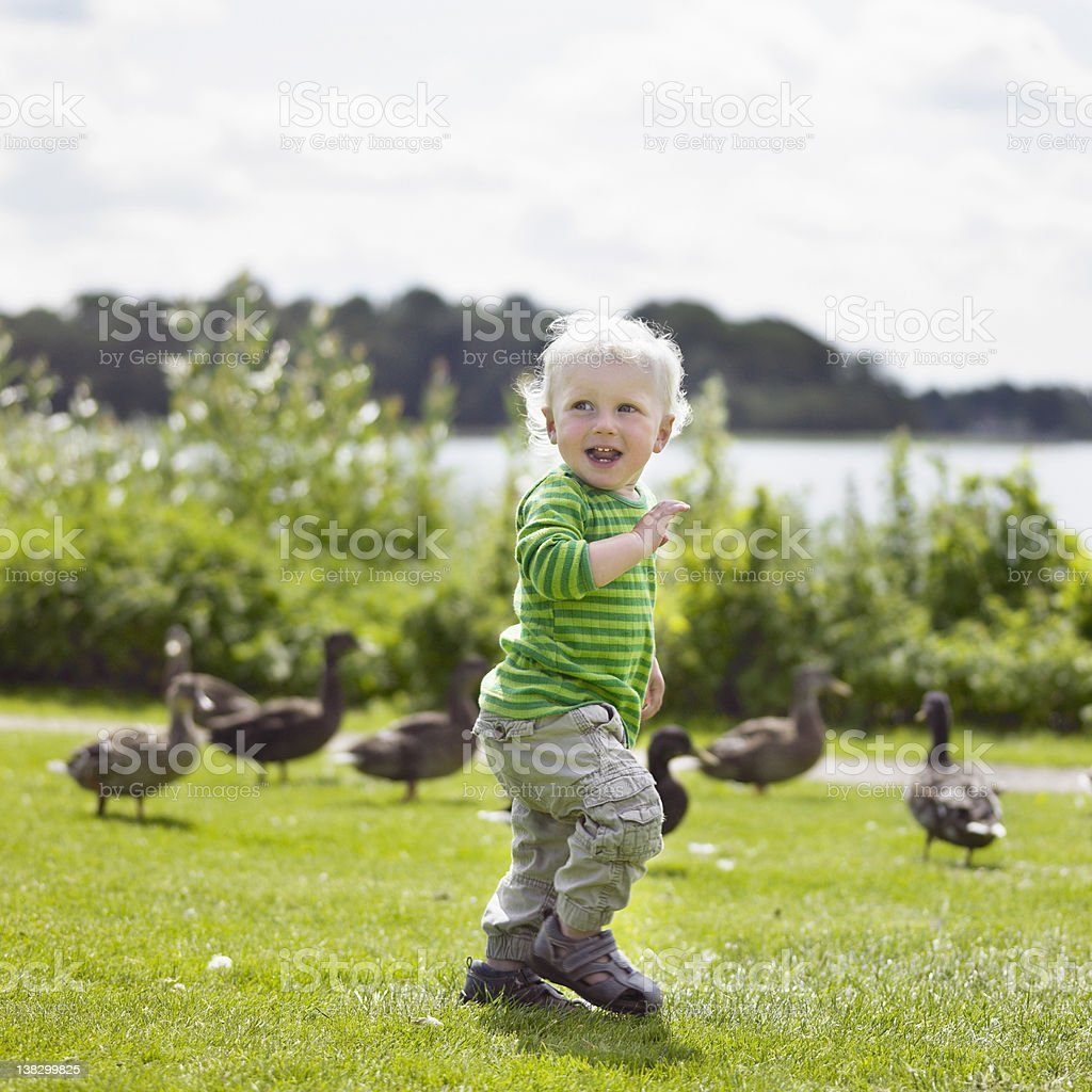 Boy playing with ducks in yard stock photo