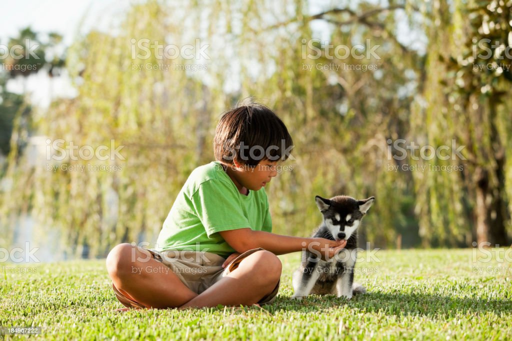 Boy playing with husky puppy stock photo