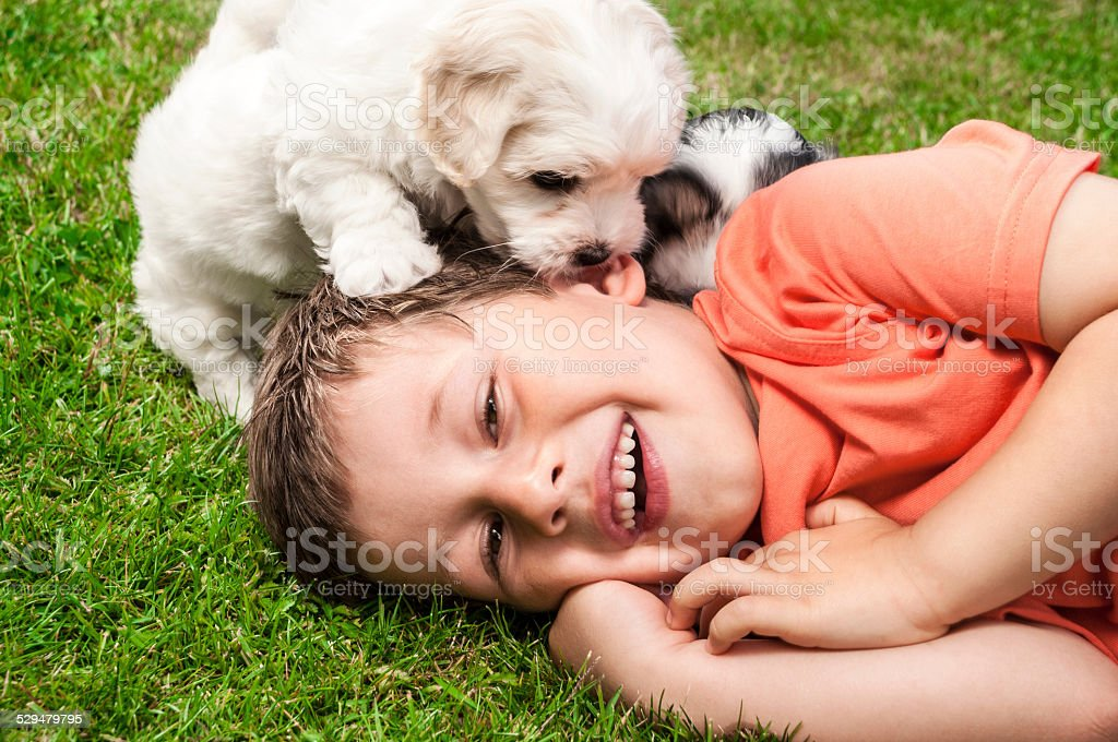 Boy playing with puppies stock photo