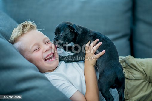 A laughing little boy is playing on the couch with his adorable puppy. The puppy is licking the boy's face and tickling him.