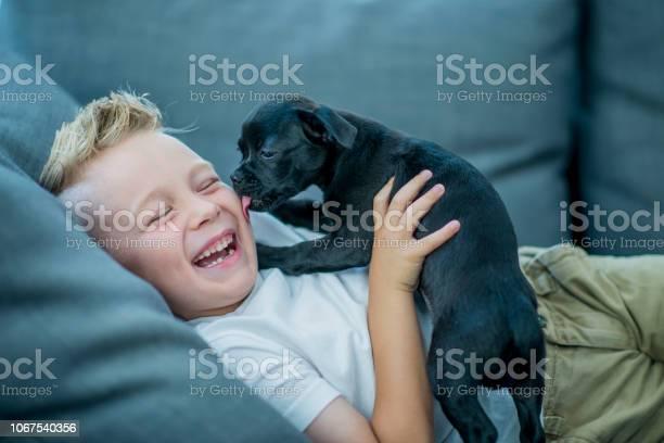 Boy playing with puppy picture id1067540356?b=1&k=6&m=1067540356&s=612x612&h=4hwveqgx1yyhy7cvsys gc8p6vkrwhuk8 qx2hqldle=