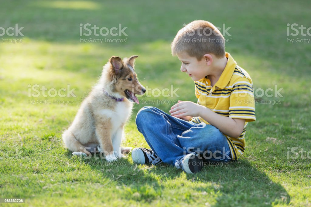 Boy playing with sheltie puppy in park foto stock royalty-free