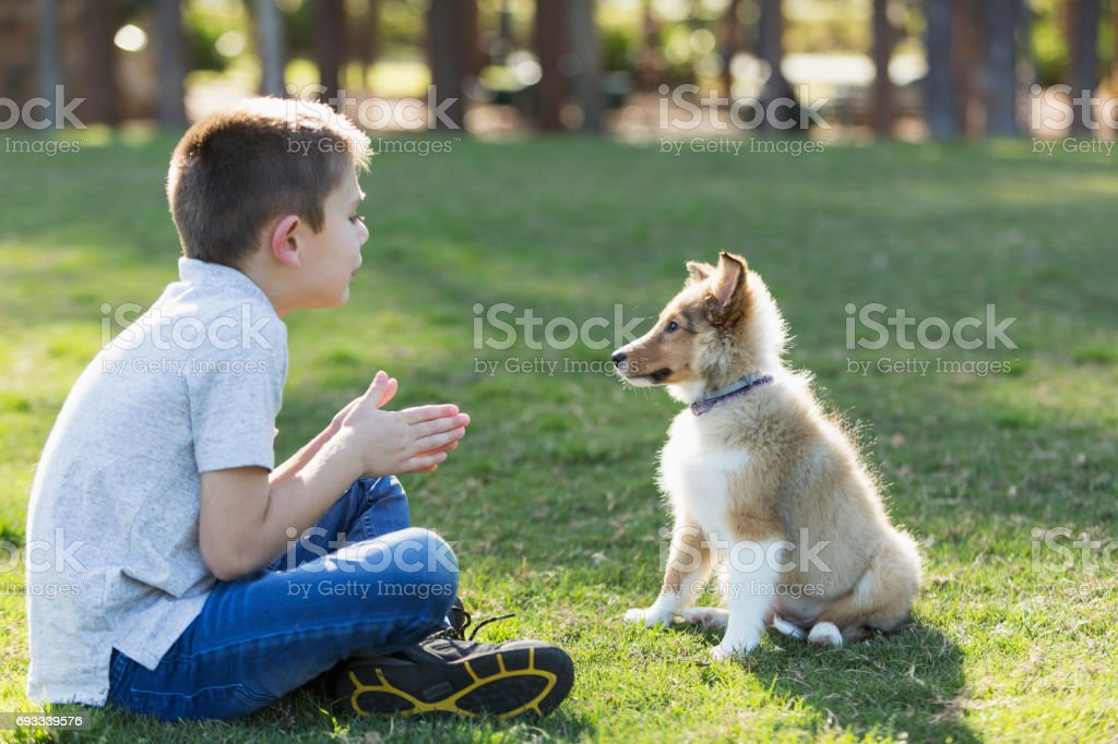 Boy playing with sheltie puppy in park stock photo