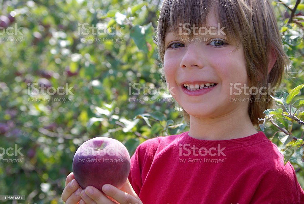 Boy presenting apple standing in an orchard royalty-free stock photo