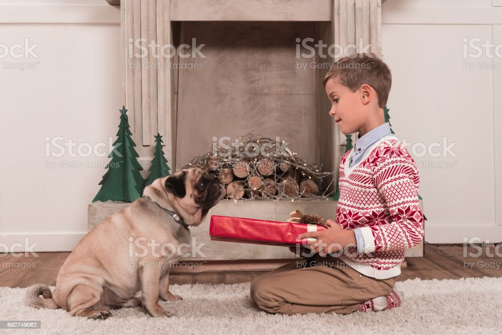 boy presenting gift to dog stock photo