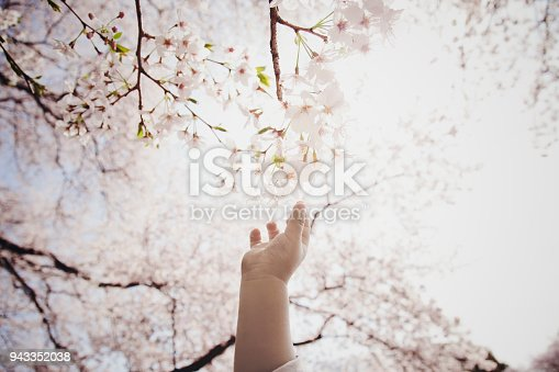 istock Boy reaching for cherry blossoms 943352038