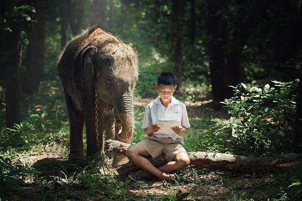 junge liest buch, mit elefanten bei elephant village school in thailand. - vorschulzoothema stock-fotos und bilder