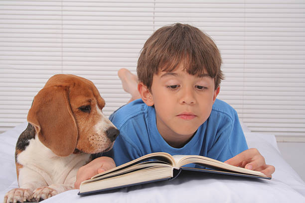A boy reading in bed with his puppy stock photo