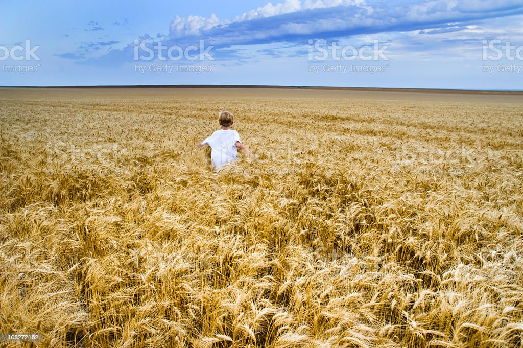 Boy Running through wheat field before harvest with dramatic sky royalty-free stock photo