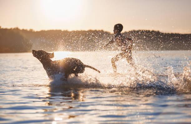 Boy runs with the dog in the lake splashing the water around playful picture id1161726856?b=1&k=6&m=1161726856&s=612x612&w=0&h=lyc57vmvwc0obfuq z7rj  hlm7yifm9mykraxmzun4=