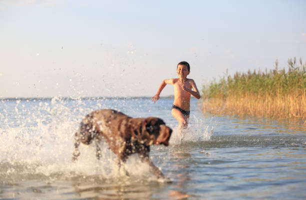 Boy runs with the dog in the lake splashing the water around playful picture id1161726889?b=1&k=6&m=1161726889&s=612x612&w=0&h=nd9hafad1fxv8rkecdx3n5ybffol1uhhqxghuisukts=