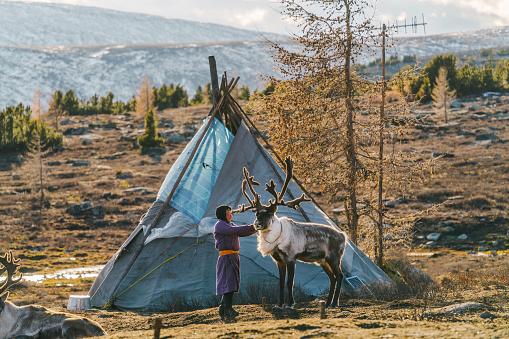 Indigenous boy  shepherding reindeers  in Mongolia
