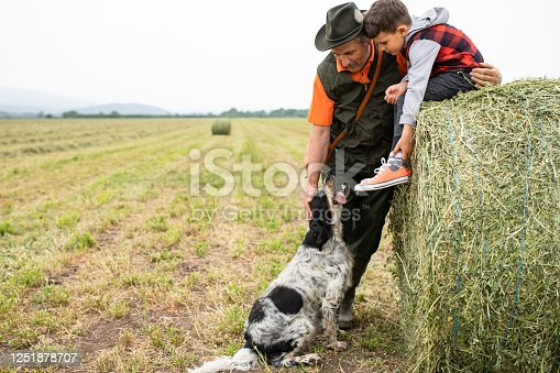 A boy is sitting on a bale of clover leaning forward to pet a dog that his grandfather is petting