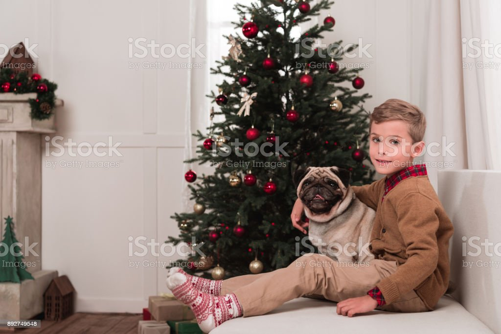 boy sitting on couch with pug stock photo