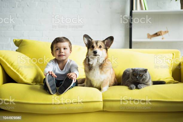 Boy sitting on yellow sofa with welsh corgi dog and scottish fold cat picture id1044929380?b=1&k=6&m=1044929380&s=612x612&h=w6urqv7kgkufifdu85cwjuh1baofqvi 6trxtmfont8=