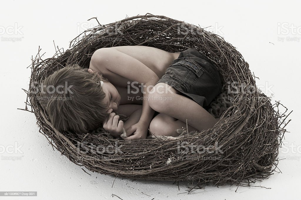 Boy (4-5 years) sleeping in nest, studio shot royalty free stockfoto