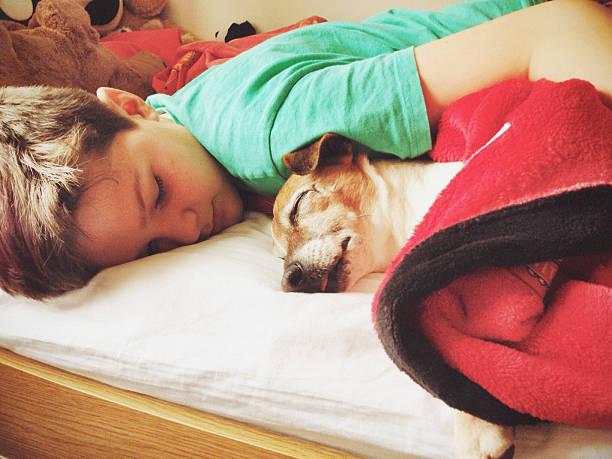 junge schlafen mit hund - bett für jungs stock-fotos und bilder