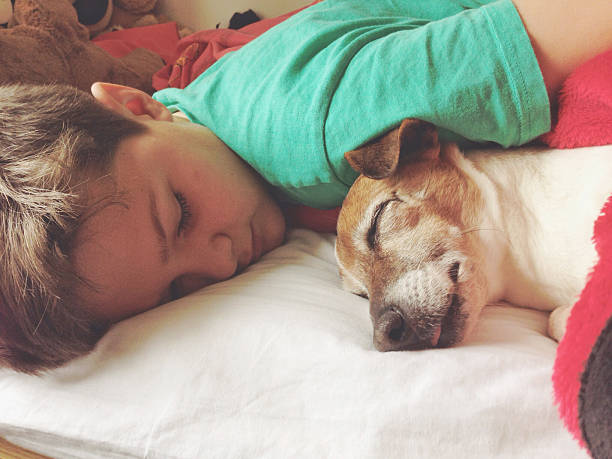 Boy sleeping with dog Boy sleeping with his dog, a female senior Jack Russell Terrier taken on mobile device stock pictures, royalty-free photos & images