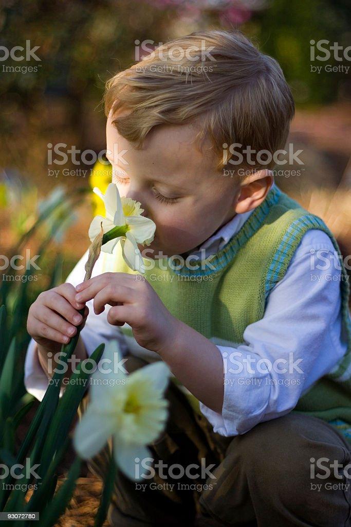 Boy Smelling Flower stock photo