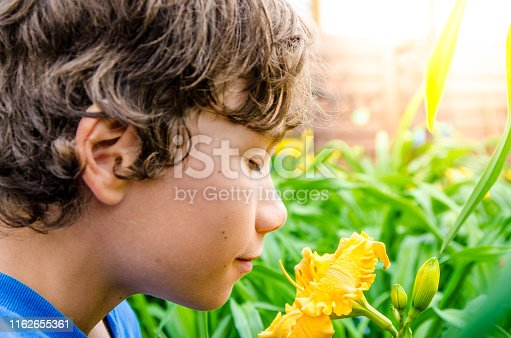 Boy smelling yellow daylily during summer day. His eyes are closed