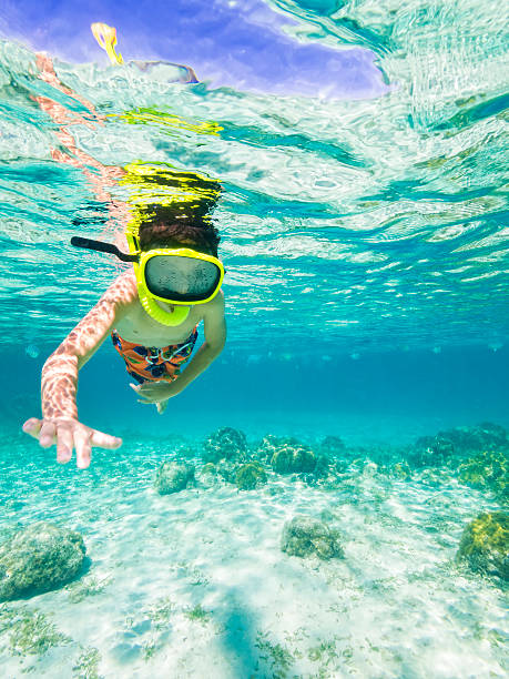 Boy snorkeling through Caribbean Sea  roatan stock pictures, royalty-free photos & images