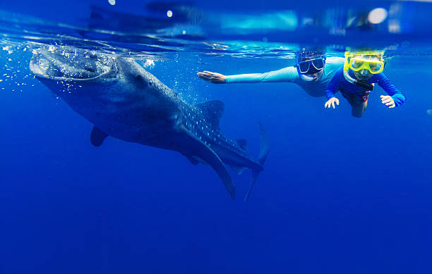 boy snorkeling with whale shark - cebu stockfoto's en -beelden