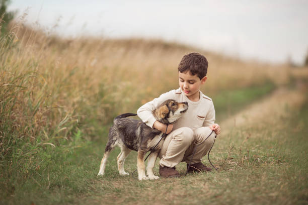 boy squats and hugs dog in field in autumn - bambino cane foto e immagini stock
