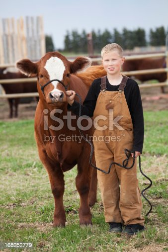 istock Boy standing next to his calf on rope 168252779