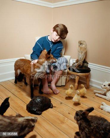 istock Boy stroking stuffed animals 56180588