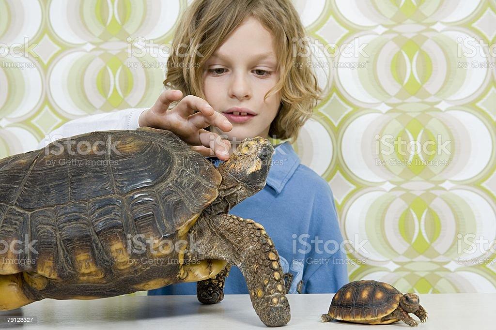 Boy stroking tortoises head 免版稅 stock photo