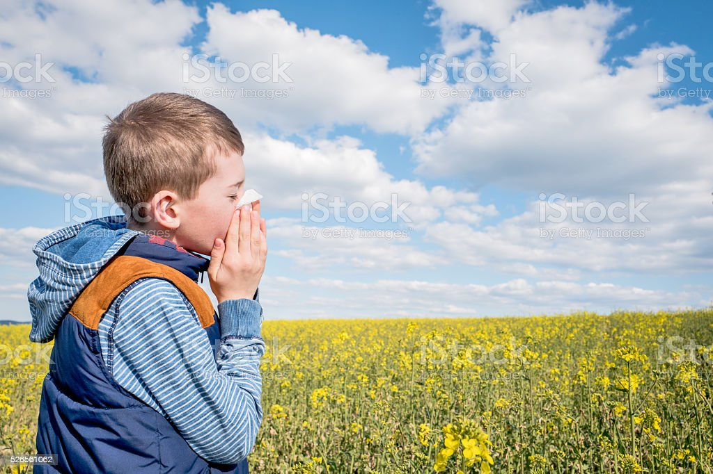 Little boy in yellow canola field blowing his nose and suffering from...
