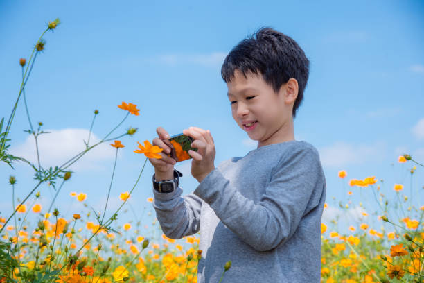 boy taking photo of flower by phone stock photo