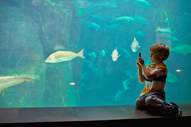 Boy taking pictures of fish in aquarium  field trip stock pictures, royalty-free photos & images