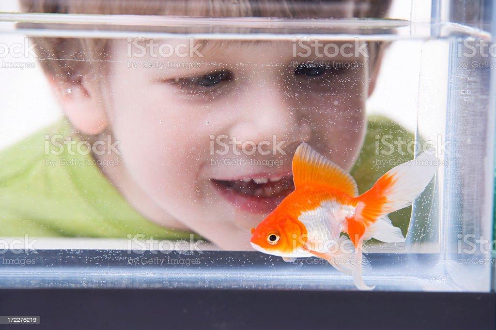 Boy talking to little goldfish stock photo