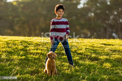High quality stock photo of a boy training a Goldendoodle at park with treats and hand signals.