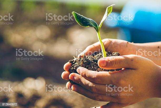 Boy transplanting the seedling picture id512640572?b=1&k=6&m=512640572&s=612x612&h=b73cajkyvld1njopl3d iq zyjub4tlmmeyxez i8em=