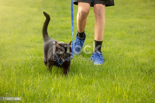 The legs of a teen boy walking his cat on a leash in grass on a beautiful spring day.