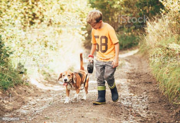 Boy walks with his beagle dog on the country road picture id650298014?b=1&k=6&m=650298014&s=612x612&h=cvq3l3pdj iuf3wc22yjs9dzaealjhi7zs4abzo3joo=
