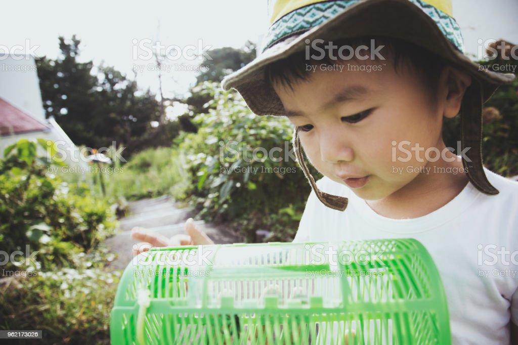 虫かごに虫を見て少年 ストックフォト