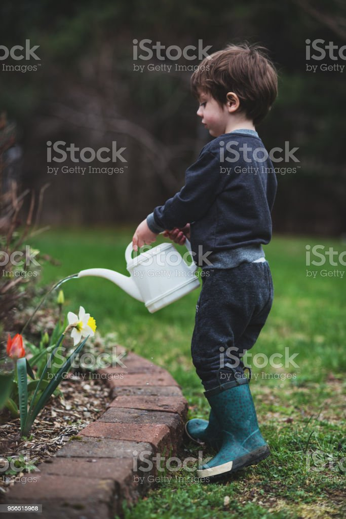 Boy Watering Garden stock photo