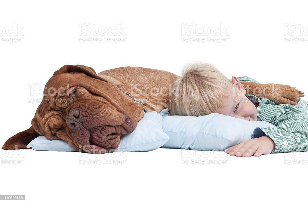 Boy with a dog on the floor stock photo