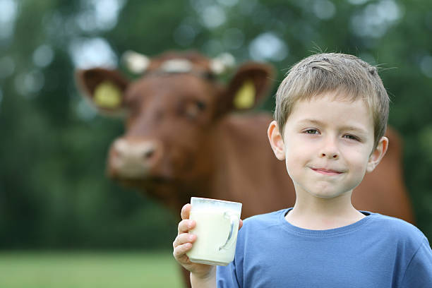 A boy with a glass of milk and a cow in a background stock photo