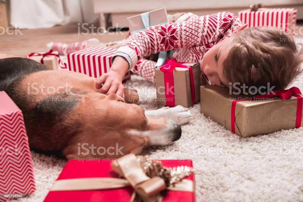 boy with beagle dog and christmas gifts stock photo