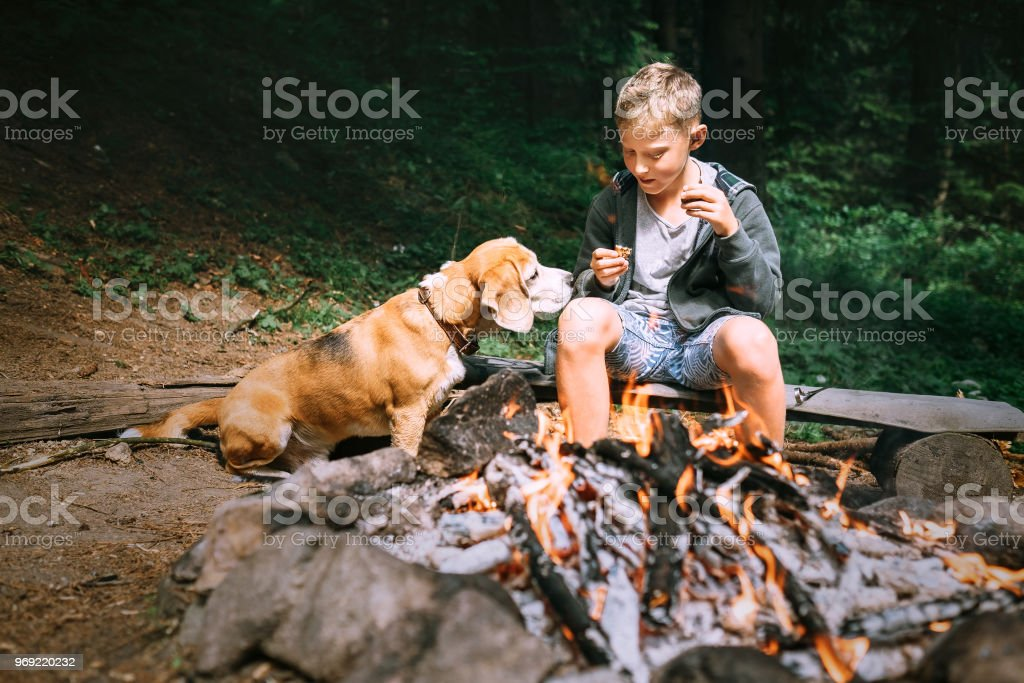 Boy with beagle dog have a picnic near campfire on forest glade stock photo