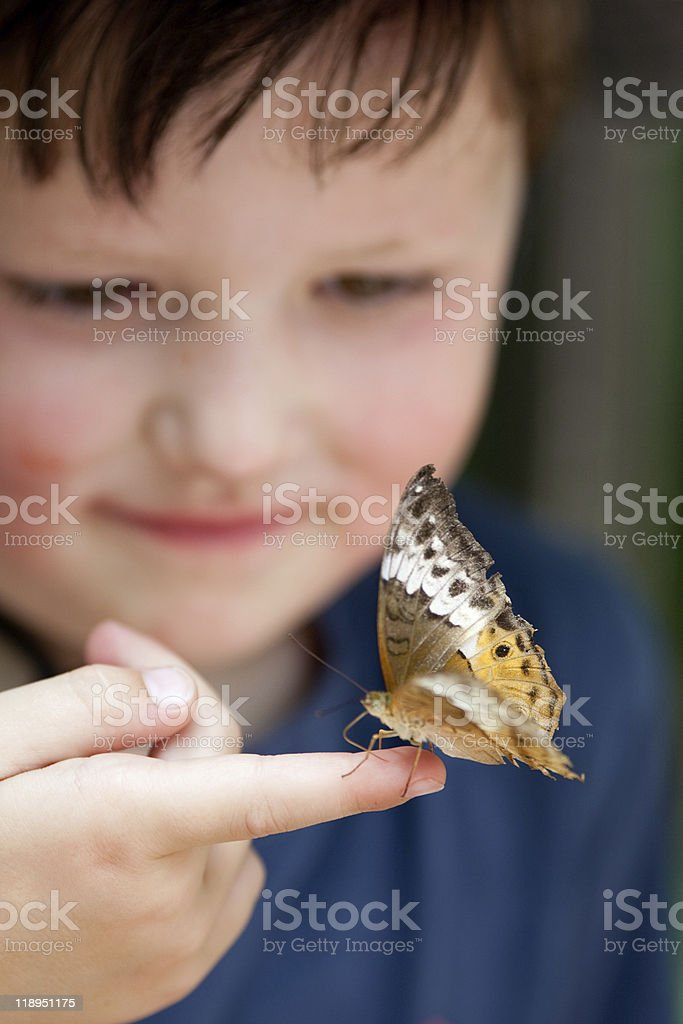 Boy with butterfly. stock photo