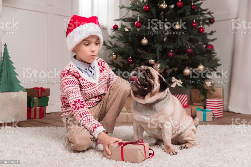 boy with christmas gift and pug stock photo