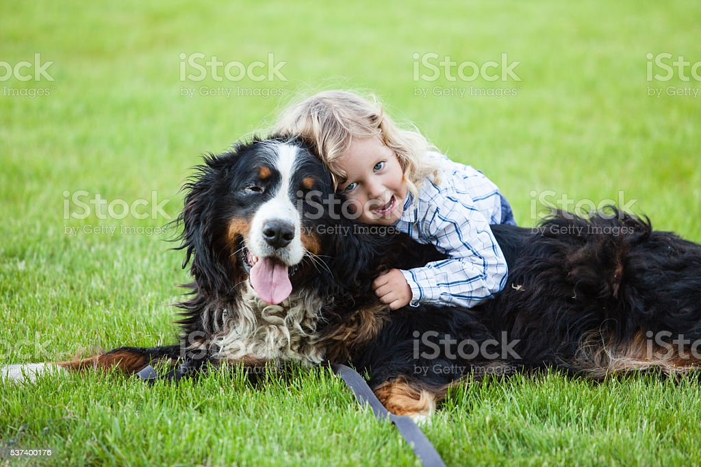 boy with curly blonde hair embraces a bernese mountain dog stock photo